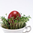 图库照片: Isolated cress in small cup with easter egg on white background - closeup