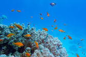 Colorful coral reef with hard coral and exotic fishes at the bottom of tropical sea — Stock Photo