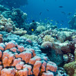 Coral reef with stony corals at the bottom of tropical sea — Stock Photo