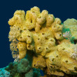 Coral reef with great yellow sea sponge at the bottom of tropical sea — Stock Photo #23921115