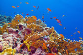 Coral reef with fire coral and exotic fishes at the bottom of tropical sea — 图库照片