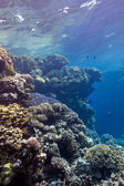 Coral reef with great hard corals at the bottom of tropical sea — Stock Photo
