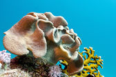 Coral reef with soft coral at bottom of tropical sea — Stock Photo