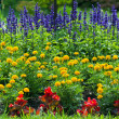 Colorful blooming  flower garden — Stock Photo