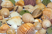Collection of various colorful seashells on white background — Stock Photo