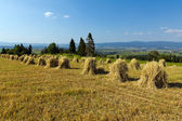 Field with some bundles of hay on blue sky background — Stock Photo