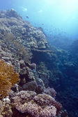 Coral reef with hard and fire corals at the bottom of tropical sea — Stock Photo