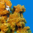 Stock Photo: Coral reef with sea sponge isolated on blue water background