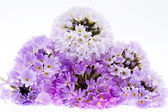 Some violet spring  flowers of  primula isolated on white background — Stock Photo