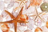 Various types of sea shells isolated on white background — Stock Photo