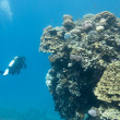 Carol reef with stony corals and divers at the bottom of tropical sea on blue water background — Stock Photo #45665525