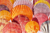 Collection of various colorful seashells on black background — Stock Photo