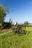 Old unused agricultural machine standing on green grass — Stock Photo
