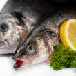 Seafood Fresh fish — Stock Photo