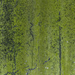 Green Moss texture - Mossy wall outdoors — ストック写真