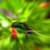 Humming Bird - Zoom blurred - square — Stock Photo