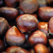 Raw chestnuts background close up macro square — Stock Photo