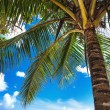 Tropical beach palm tree Trinidad and Tobago Maracas Bay — Stok fotoğraf