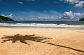 Maracas bay Trinidad and Tobago beach palm tree shadow sharp — Stock Photo