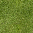 Green Lawn Wallpaper — Stock Photo #30003649