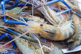 Prawn sold in the market. — Stock Photo