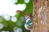 Lanternfly, l'insetto sulla frutta di albero. fulgorid avviene. — Foto Stock