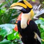 Hornbill — Stockfoto