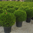 Stock Photo: Young plant grown in nursery