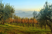 Tuscan landscape in winter — Stock Photo