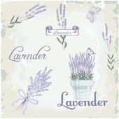Lavender herb flower, vintage background — Stock Vector