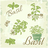 Fennel, dill, herb, plant, nature, vintage background, packaging calligraphy — Stock Vector