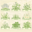 Herbs — Stock Vector #33080971