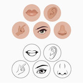 Five senses, nose lips eye ear and hand — Stock Vector