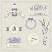 Lavender herb flower, floral vintage background — Stock Vector