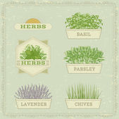Isolated herbs,lavender, chives, parsley,  and basil, — Stock Vector