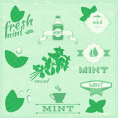 Isolated herbs, mint vector leaves set illustration, peppermint background — Stock Vector