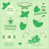 Isolated herbs, melissa vector leaves — Stock Vector