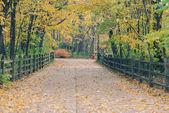 Trail i parken. — Stockfoto