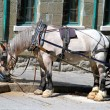 Stock Photo: Horse-drawn Buggy