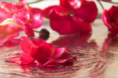 Orchid in the water with reflection — Stock Photo