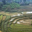 Dry and wet terraced rice paddies in winter landscape. — Stock Photo