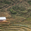 Lonely barn in terraced fields on mountain flank. - Stock Photo