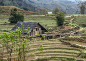 Rural late winter scenery with barn among terraced dry rice fields. — Stock Photo