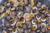 Vietnam Dong Hoi market - Sea snails or marine gastropod mollusks — Stock Photo