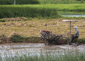 Farmer plows through muddy rice paddy with motorized machine. — Stok fotoğraf