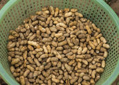 Green basket filled with freshly harvested peanuts. — Stock Photo
