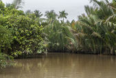 The jungle overgrows the canals of Mekong Delta, Vietnam. — Stock Photo