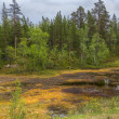 Stock Photo: Marshland in northern Lapland during summer.