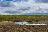 Cloudy blue skies over marshland in Lapland during summer. — Stock Photo
