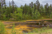 Marshland in northern Lapland during summer. — Stock Photo